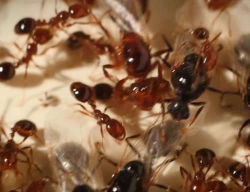 How To Defeat Troublesome Fire Ants