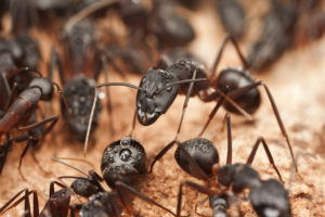 Ant control San Antonio