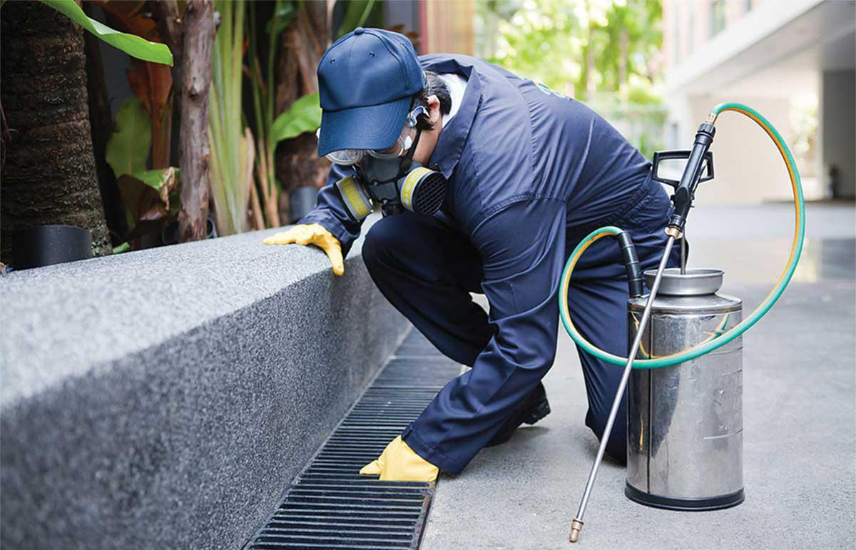 Pest control services san antonio