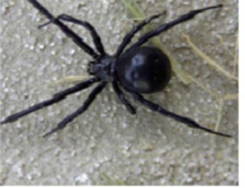 Spider Extermination – Jenkins Pest Control San Antonio